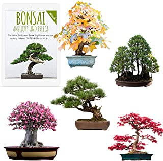 Außergewöhnliche Bonsai Samen mit hoher Keimrate - Pflanzen Samen Set für deinen eigenen Bonsai Baum 5er Set inkl. GRATIS eBook