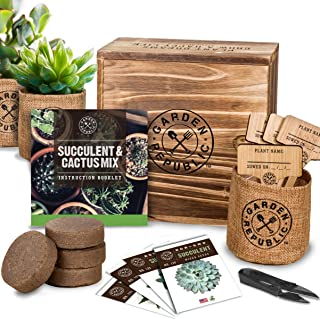 Best grow cactus kit Reviews