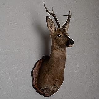 deer shoulder mounts for sale