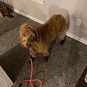 S XYDZ 4 Piezas Botas de Lluvia para Perros Zapatos para Mascotas Antideslizante Botas Impermeables para Perros Peque/ños Perrito
