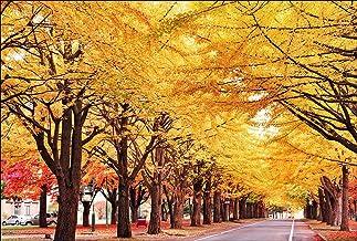 【Amazon.co.jp 限定】北海道大学の銀杏並木 ポストカード3枚セット P3-068