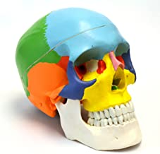Best colored skull anatomy Reviews