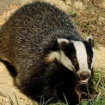 Best honey badger wallpaper Reviews