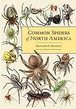 common spiders of north america book