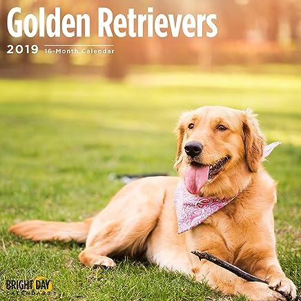 Golden Retrievers 2019 16 Month Wall Calendar 12 x 12 Inches