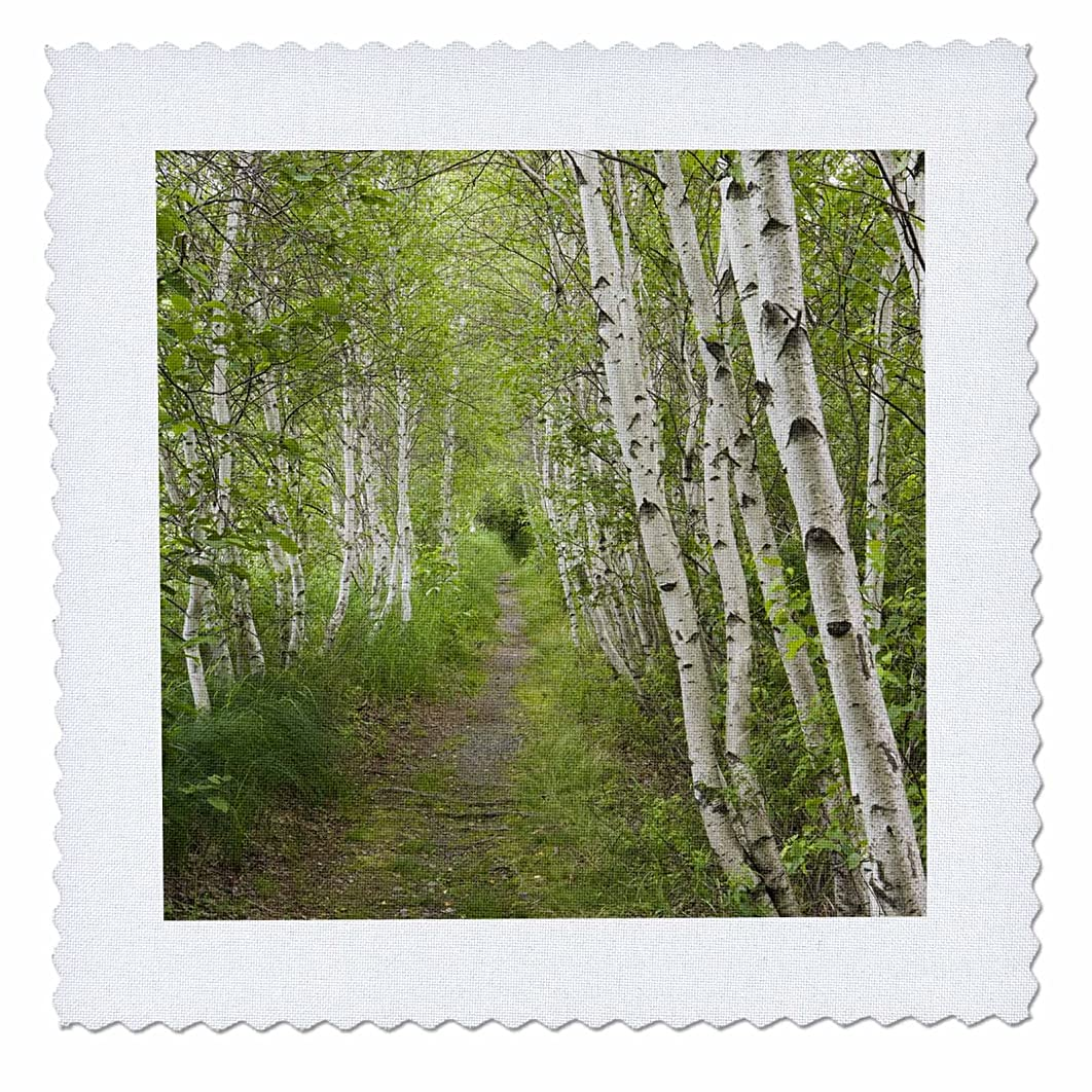 3dRose qs_90692_4 Paper Birch Trees, Path, Acadia NP, Maine - US20 JMO0986 - Jerry and Marcy Monkman - Quilt Square, 12 by 12-Inch