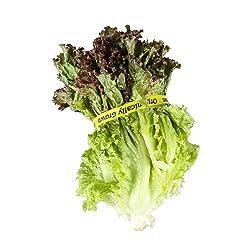 Lettuce Red Leaf Organic, 1 Each