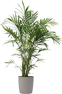 Best palm tree live Reviews