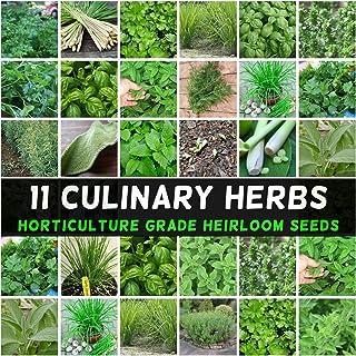Herb Seeds Mint Parsley Chives Dill Basil Coriander Sage Thyme Tarragon Oregano 11 Packs Culinary Herbal Garden
