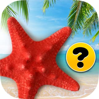 Brain game : Memory training for adults : Beach *Free