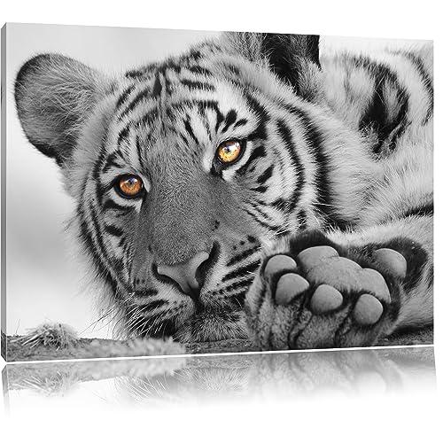Tableau toile Noir Animaux: Amazon.fr
