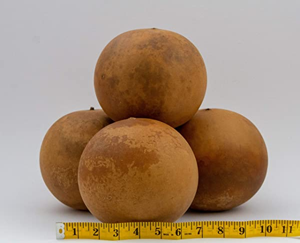 Cannon Ball Gourds Box Of 4 Washed And Ready