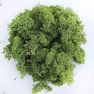 Reindeer Moss Preserved Floral Moss (Reindeer Moss-Basil)