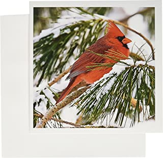 3dRose Red and black cardinal perched in snowy pine tree - Greeting Cards, 6 x 6 inches, set of 12 (gc_112146_2)