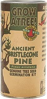 Best bristlecone pine seeds Reviews