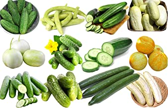 persian cucumber varieties