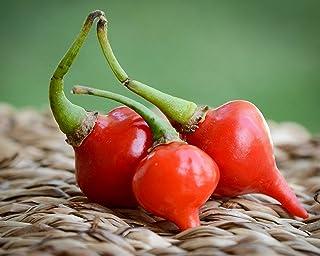 Red Biquinho Chupetinho Heirloom Little Beak Pickling Pepper Premium Seed Packet