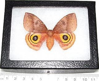 Best death moth framed Reviews