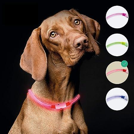 Leuchtie Leuchthalsband Plus Rot Größe 40 I Led Halsband Für Hunde I 100 H Leuchtdauer I Wasserdicht I Enorm Hell Haustier