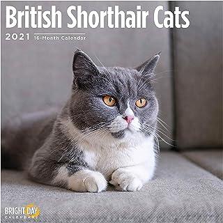 2021 British Shorthair Cats Wall Calendar by Bright Day, 12 x 12 Inch, Cute Kitten