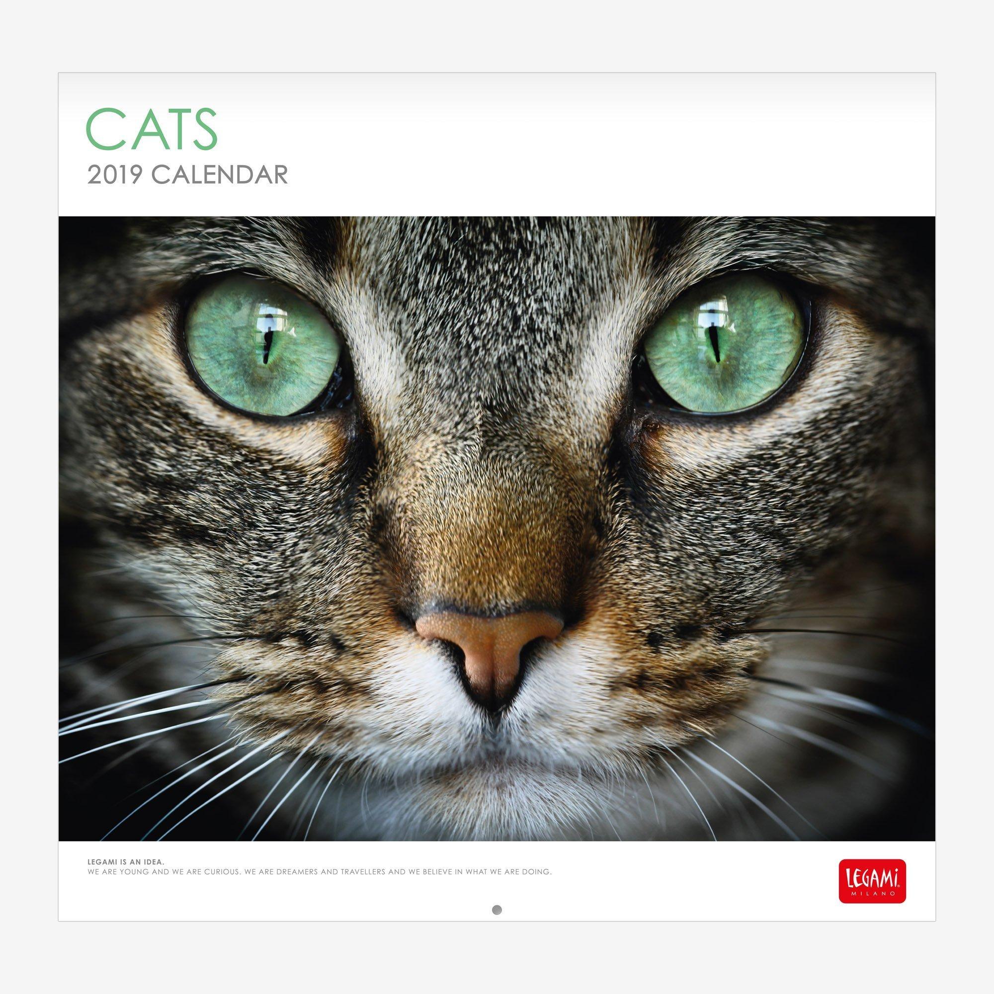 Cats 2019 - Calendario de pared (30 x 29 cm): Amazon.es: Oficina y papelería