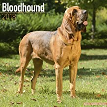Bloodhound Calendar - Dog Breed Calendars - 2017 - 2018 wall Calendars - 16 Month by Avonside