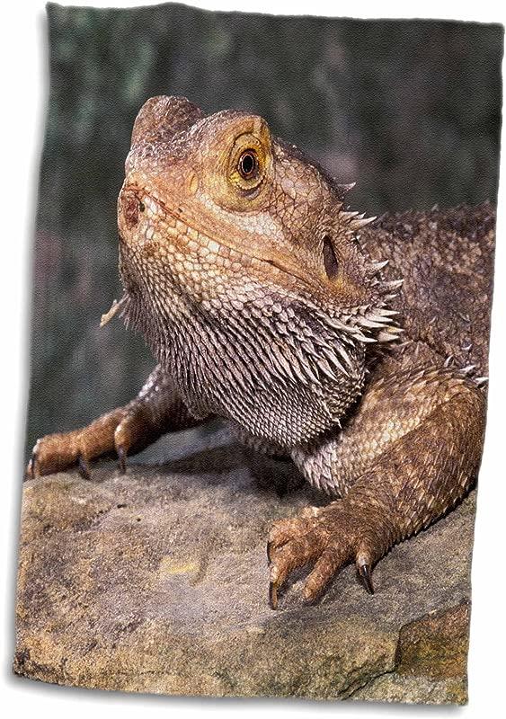 3dRose Bearded Dragon Lizard NA02 CAD0036 Claudia Adams Towel 15 X 22