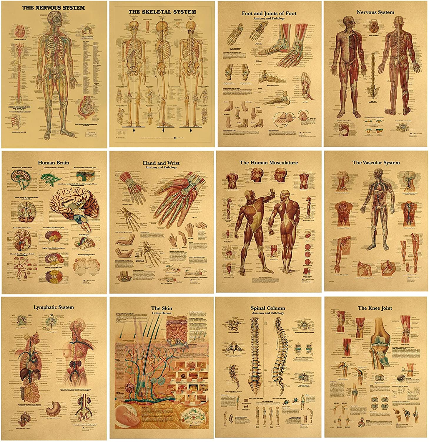 Vintage Indefinitely Anatomical Poster Set Louisville-Jefferson County Mall - Decor M Photos Wall