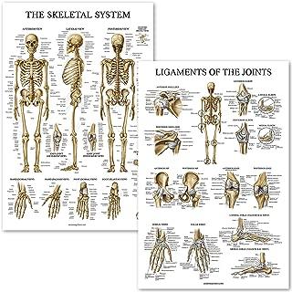 skeleton poster with bone names