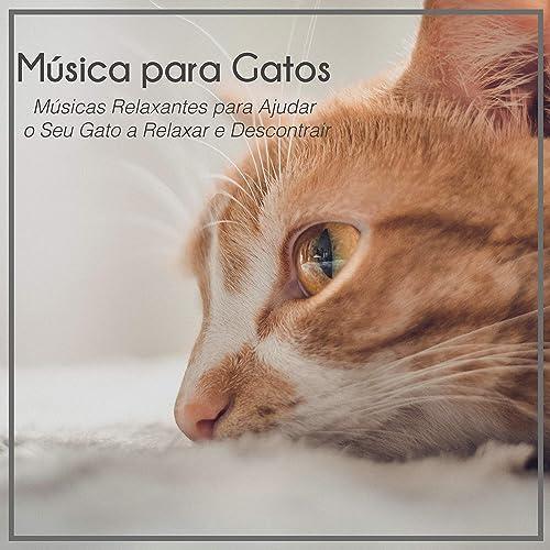 Música para Gatos: Músicas Relaxantes para Ajudar o Seu Gato a Relaxar e Descontrair