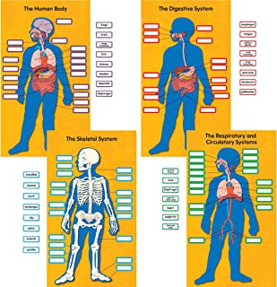 Carson-Dellosa 110178 Bulletin Board Set, Human Body, 13-3/4-Inch x24-Inch , 84/PK, Multi