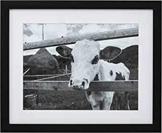 Black and White Curious Cow Photo Wall Art Décor - 18
