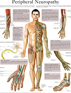 Peripheral Neuropathy e-chart: Full illustrated