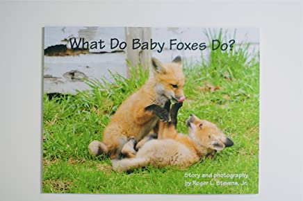 What Do Baby Foxes Do?