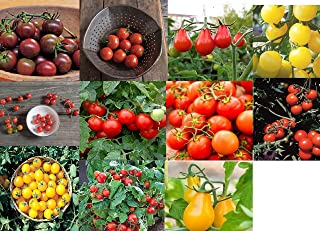 David's Garden Seeds Collection Set Tomato Cherry NE9337 (Multi) 11 Varieties 550 Seeds (Non-GMO, Open Pollinated, Heirloom, Organic)