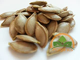30 Puerto Rican Calabaza, Pumpkin Female seeds by Prorganics
