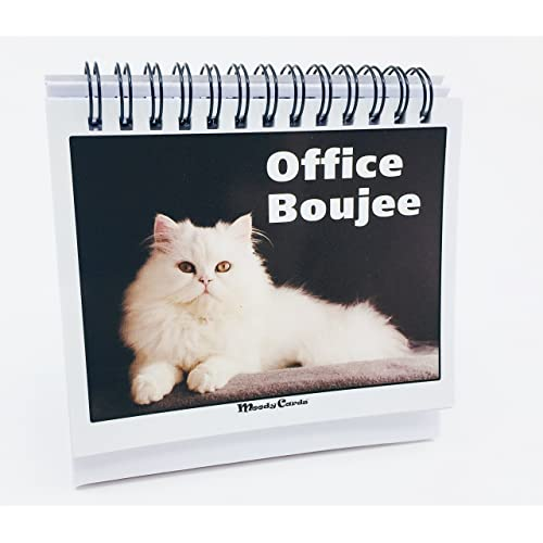 Office Gift For Cat Lovers