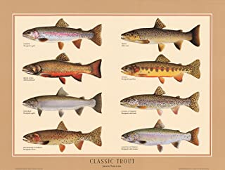 Classic Trout Fish Poster and Identification Chart