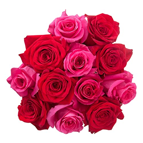 Flowers For Delivery On Amazon PICKER UPPER Bouquet 12 Fresh Roses Red Hot Pink