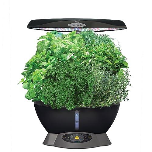 Plant Terrarium Amazon Com