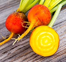 Sweet Yards Seed Co. Organic Golden Beet Seeds 'Golden Detroit' – Over 100 Open Pollinated Heirloom Non-GMO Seeds