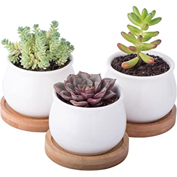 Blooming Tulip 3 Ceramic Succulent Pots Combo with Matching Saucers