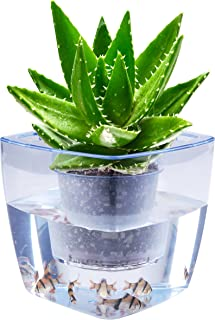 Water Herb Garden, AIBSI Hydroponics Growing System, Organic Self Watering Planter Indoor Sprouts Gardening Starter Kit Aquaponics Small Fish Tank, Best Gift Set for Women and Kid, Seeds Not Included