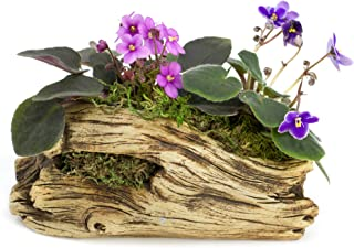 Natural Elements Log Planter (Trunk) – Realistic Woodland-Themed with Intricate Weathered bark Detail. Grow Small Succulents, Cactus, African Violets. Striking in Any décor.