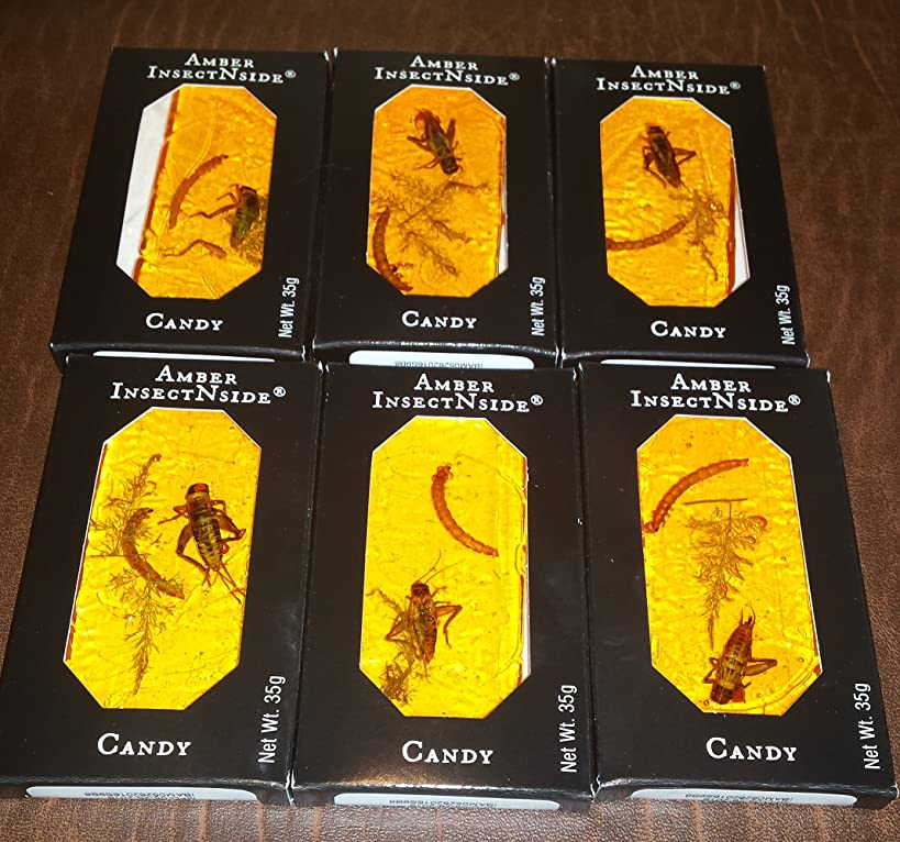 (LOT OF 6) Amber Brittle INSECTNSIDE Edible Bug Candy with Cricket Larvet and Fern