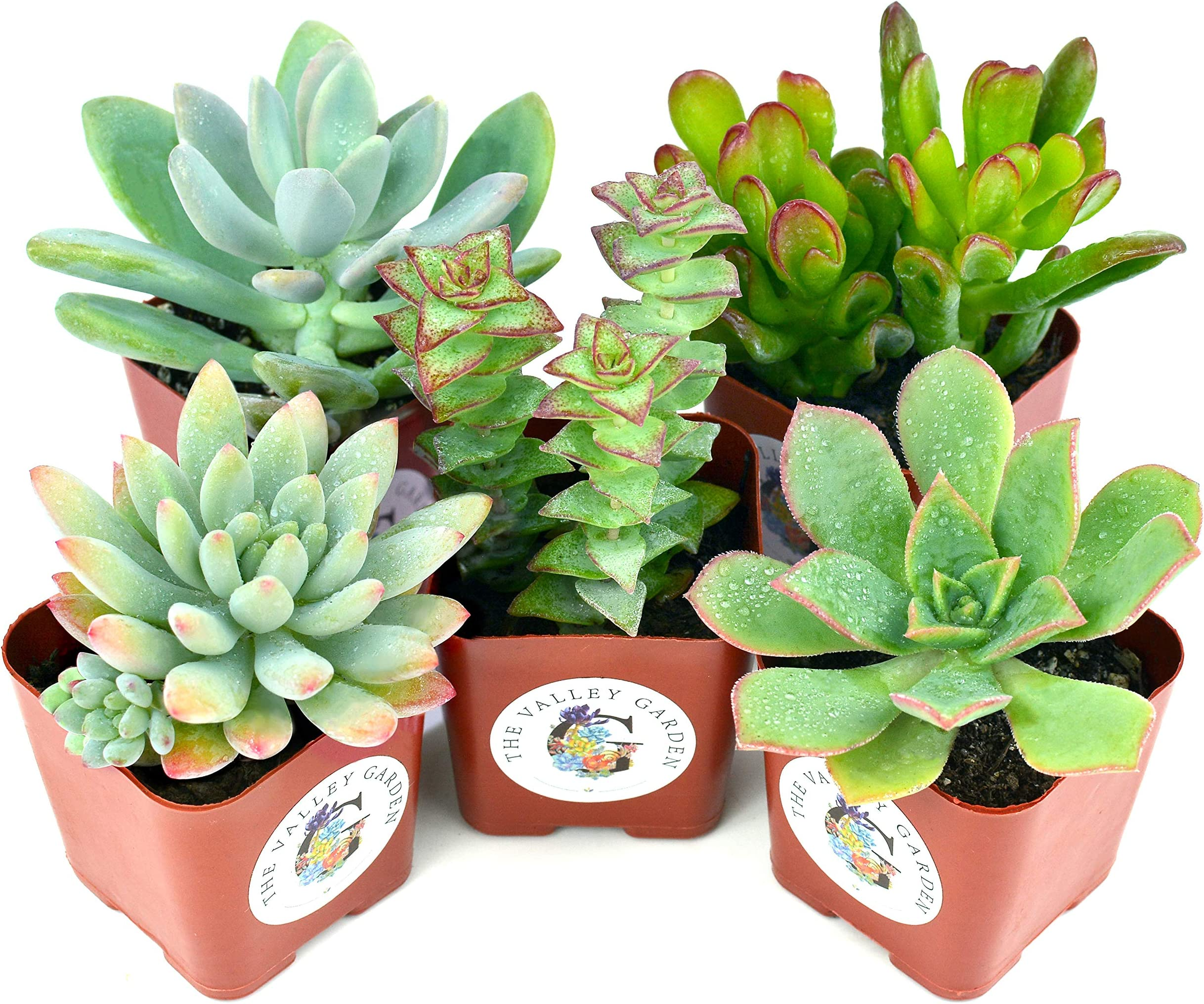- G2-S 10 pieces per pack Made of air dry clay and wire stems Random Mini Succulents Assorted