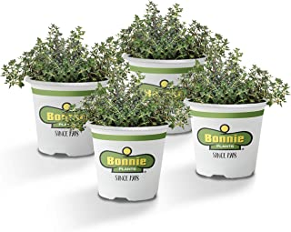 Best thyme herb seeds Reviews