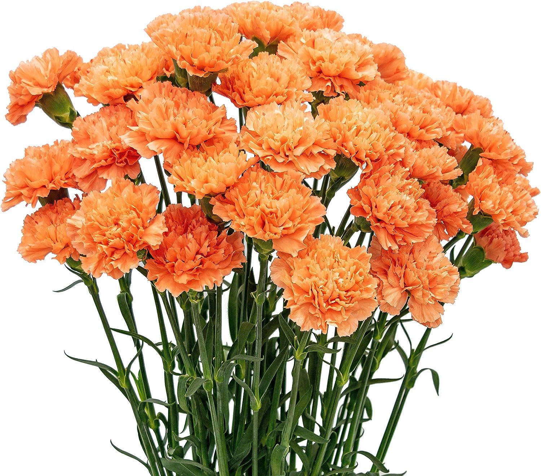 FlowerPrime 50 Orange Carnations Max 53% OFF - Cut Flowers Fresh Natural Many popular brands