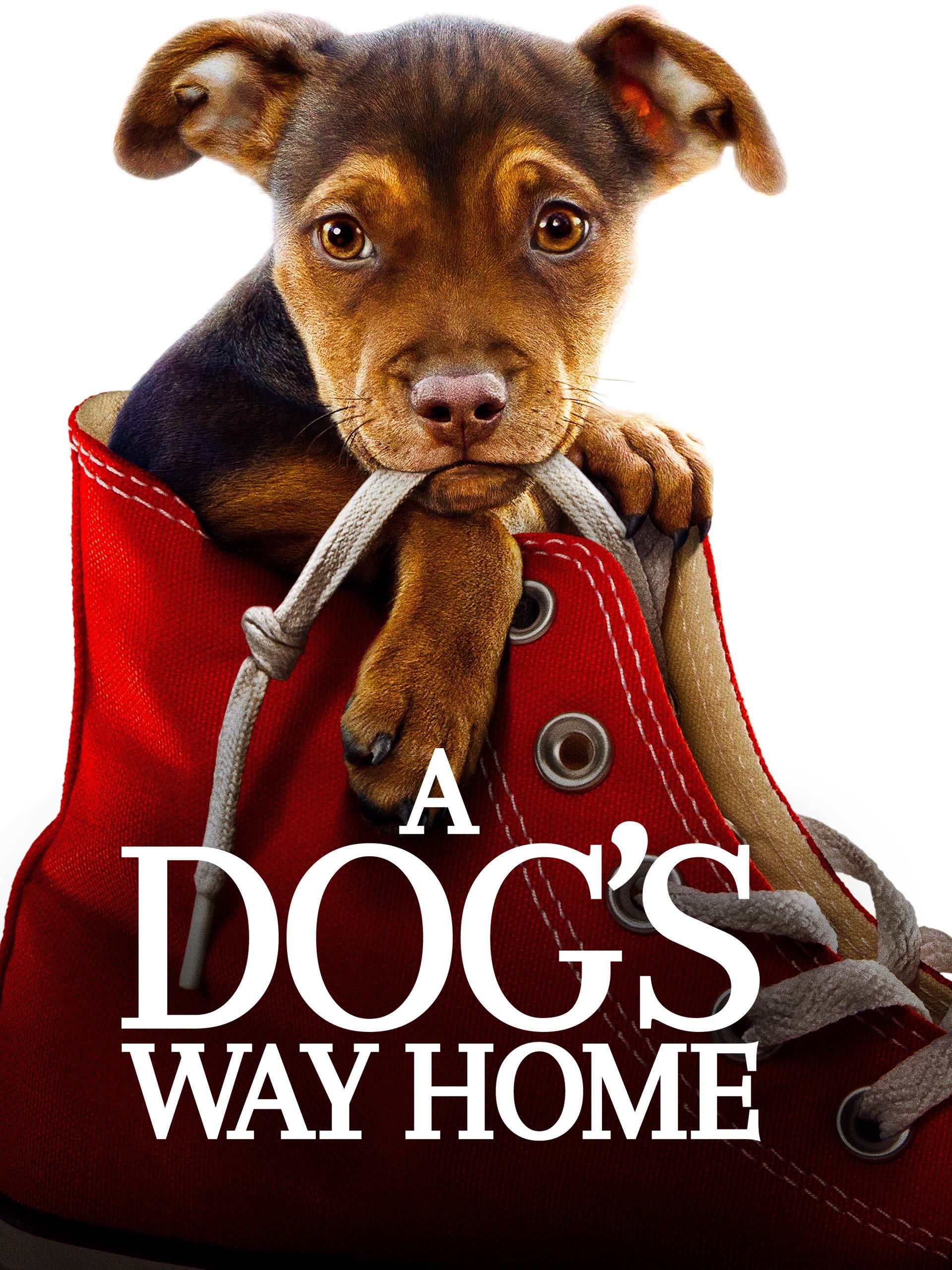 Dogs Way Home Ashley Judd