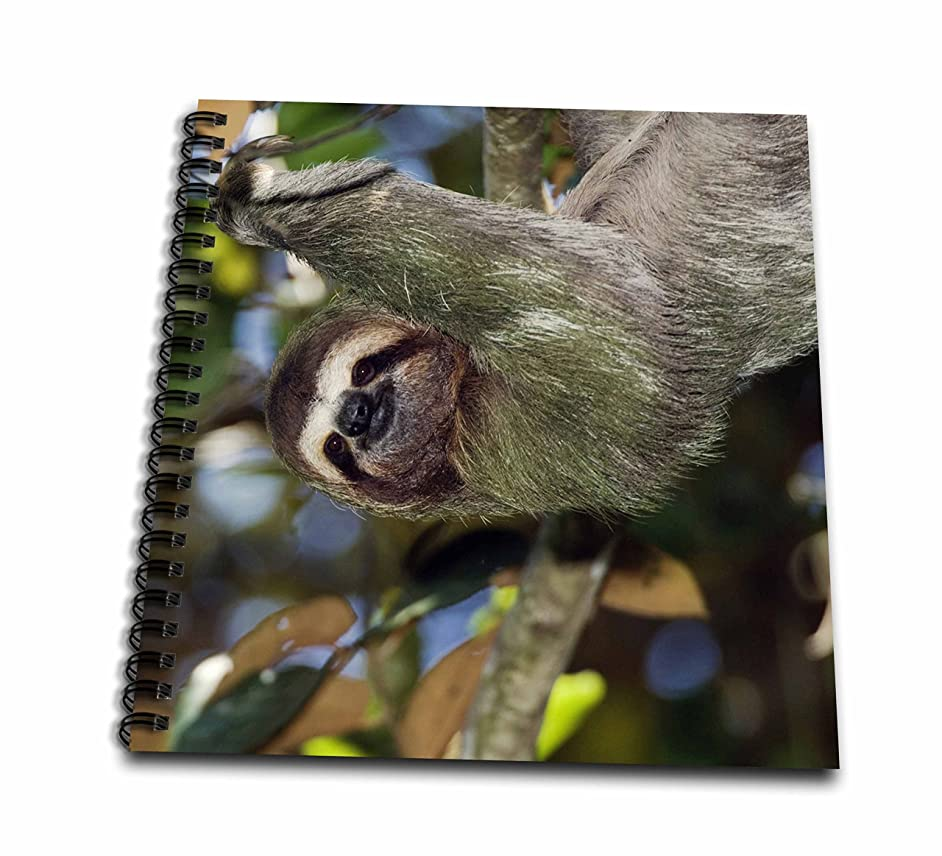 3dRose db_84631_1 Brown-throated Three-toed Sloth, Wildlife - NA02 RNU0815 - Rolf Nussbaumer - Drawing Book, 8 by 8-Inch